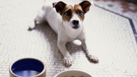 mj-618_348_ingredient-list-what-you-should-know-about-dog-food