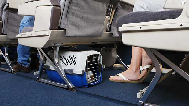 mj-618_348_jet-setting-with-pets