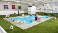 John F. Kennedy Airport in New York City will open a new terminal for animals in 2016.