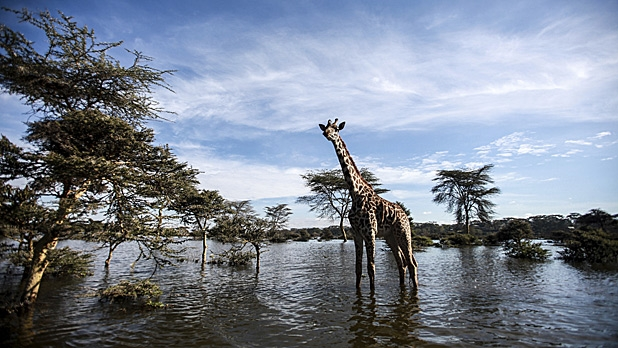 mj-618_348_look-for-specific-amenities-how-to-take-a-safari