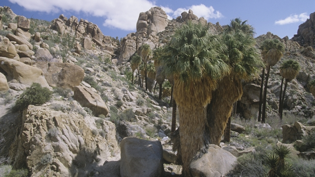 mj-618_348_lost-palms-oasis-trail-joshua-tree-national-park-ca-best-trails-hike-backpack