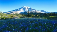 mj-618_348_mount-rainier-national-park-national-parks-not-to-miss