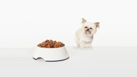 mj-618_348_organic-natural-and-holistic-what-you-should-know-about-dog-food