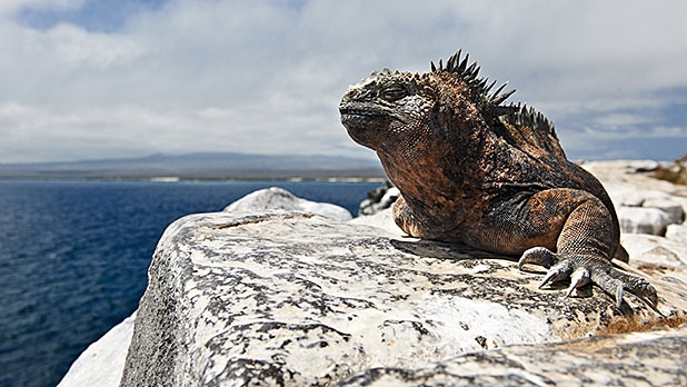 mj-618_348_pikaia-lodge-galapagos-islands-all-inclusive-adventures