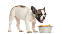 mj-618_348_regulation-what-you-should-know-about-dog-food