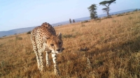 Snapshot Serengeti captured 300,000 wildlife images with heat- and motion-sensitive cameras.