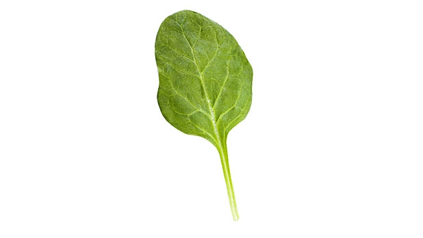 mj-618_348_spinach-foods-for-healthy-skin