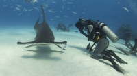 mj-618_348_swim-with-hammerhead-sharks-in-the-bahamas-experiences-gift-guide