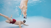 mj-618_348_swimming-workouts-you-can-do-with-your-dog