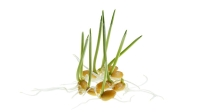 mj-618_348_the-benefits-of-sprouted-grains