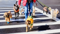 mj-618_348_the-best-cities-for-dogs