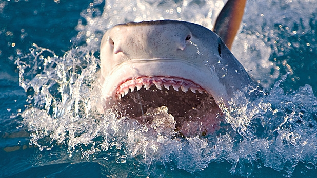 mj-618_348_the-end-of-shark-attacks