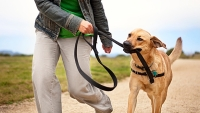 mj-618_348_the-ideal-exercise-for-your-dog