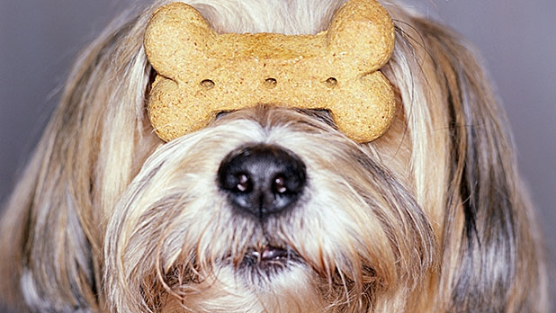 mj-618_348_tips-about-dog-treats
