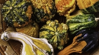 mj-618_348_tk-ask-a-chef-gourds