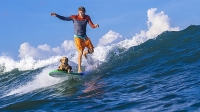 mj-618_348_train-your-dog-to-surf