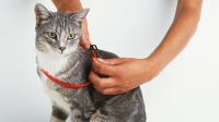 mj-618_348_why-flea-collars-may-be-killing-your-pet