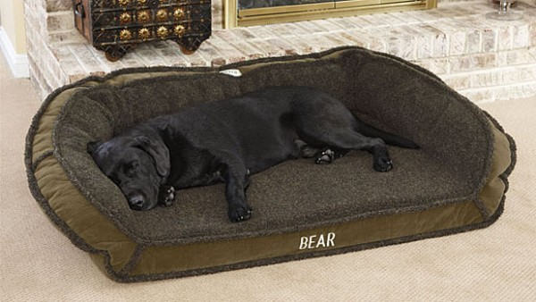 beds danes zone reviews best bed for great dog